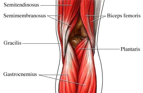knee anatomy | ohiodance, Human Body