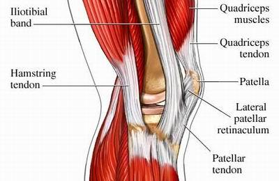 Bilderesultat for anatomy outside of knee